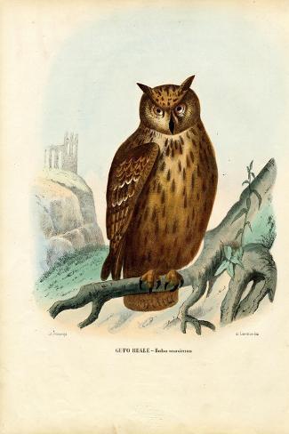 Eurasian Eagle Owl, 1863-79-Raimundo Petraroja-Stretched Canvas Print