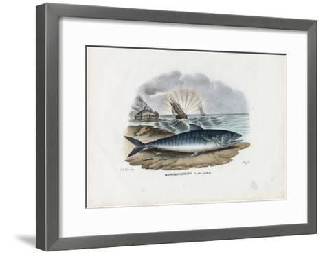Atlantic Mackerel, 1863-79-Raimundo Petraroja-Framed Art Print