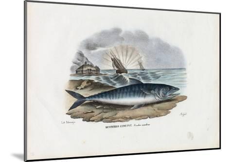 Atlantic Mackerel, 1863-79-Raimundo Petraroja-Mounted Giclee Print