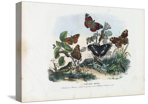 Butterflies, 1863-79-Raimundo Petraroja-Stretched Canvas Print