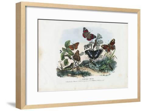 Butterflies, 1863-79-Raimundo Petraroja-Framed Art Print