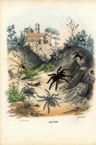Spiders, 1863-79-Raimundo Petraroja-Stretched Canvas Print