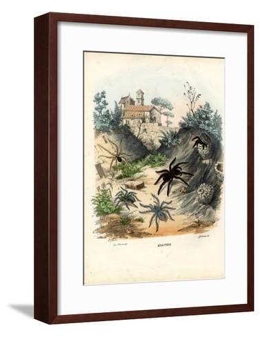 Spiders, 1863-79-Raimundo Petraroja-Framed Art Print