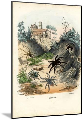 Spiders, 1863-79-Raimundo Petraroja-Mounted Giclee Print