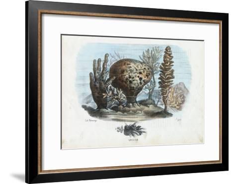 Sponges, 1863-79-Raimundo Petraroja-Framed Art Print
