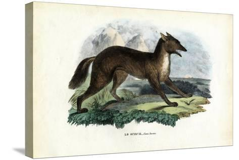 Golden Jackal, 1863-79-Raimundo Petraroja-Stretched Canvas Print