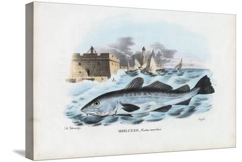 Atlantic Cod, 1863-79-Raimundo Petraroja-Stretched Canvas Print