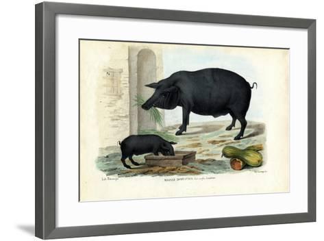 Domestic Pig, 1863-79-Raimundo Petraroja-Framed Art Print