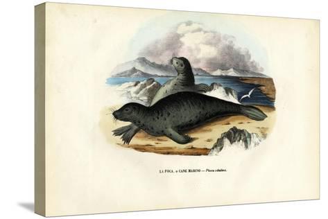 Harbour Seal, 1863-79-Raimundo Petraroja-Stretched Canvas Print