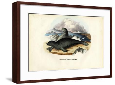 Harbour Seal, 1863-79-Raimundo Petraroja-Framed Art Print