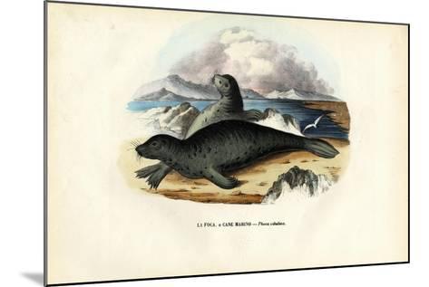 Harbour Seal, 1863-79-Raimundo Petraroja-Mounted Giclee Print