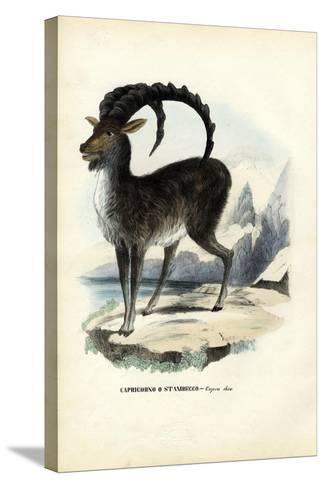 Alpine Ibex, 1863-79-Raimundo Petraroja-Stretched Canvas Print