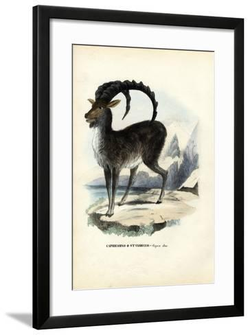 Alpine Ibex, 1863-79-Raimundo Petraroja-Framed Art Print