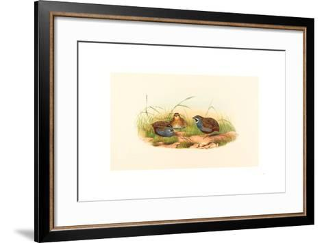 Excalftoria Minima (Blue-Breasted Quail), Colored Lithograph- Richter & Gould-Framed Art Print