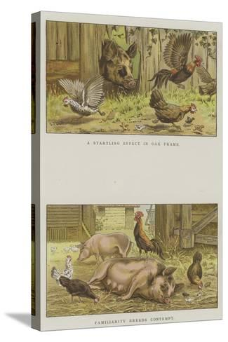 Farmyard Scenes-S^t^ Dadd-Stretched Canvas Print