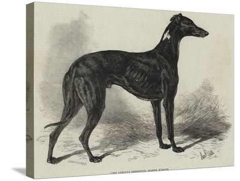 Lord Lurgan's Greyhound, Master M'Grath-Samuel John Carter-Stretched Canvas Print