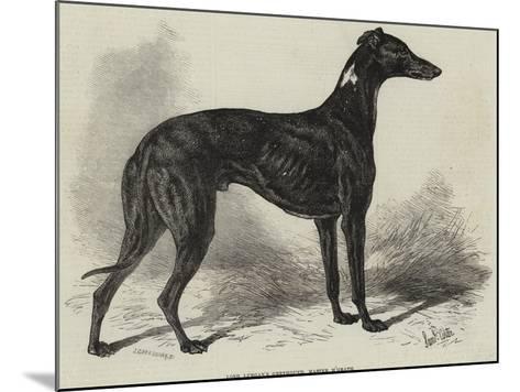 Lord Lurgan's Greyhound, Master M'Grath-Samuel John Carter-Mounted Giclee Print