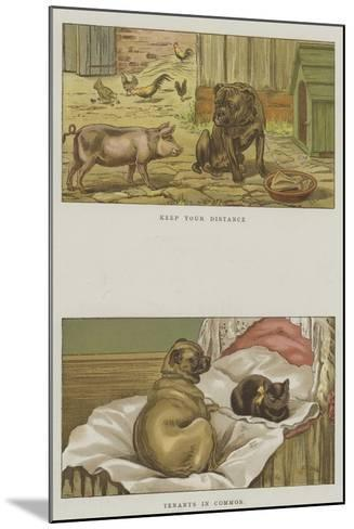 Humorous Dogs-S^t^ Dadd-Mounted Giclee Print