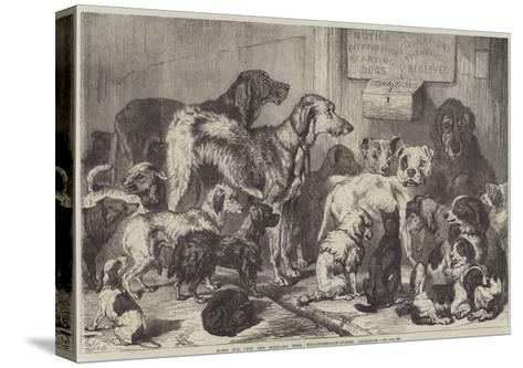 Home for Lost and Starving Dogs, Hollingsworth-Street, Islington-Samuel John Carter-Stretched Canvas Print