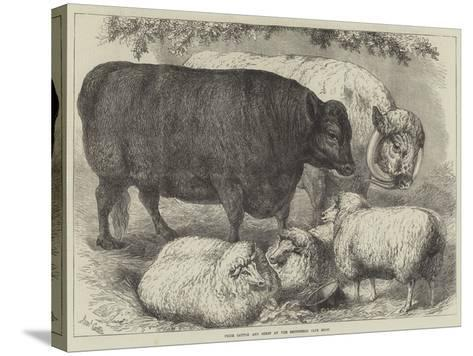 Prize Cattle and Sheep at the Smithfield Club Show-Samuel John Carter-Stretched Canvas Print
