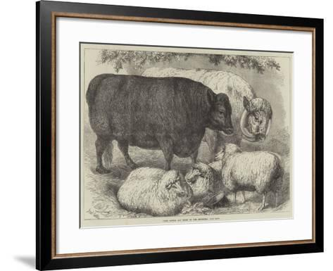 Prize Cattle and Sheep at the Smithfield Club Show-Samuel John Carter-Framed Art Print