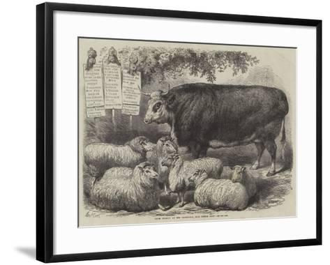 Prize Animals at the Smithfield Club Cattle Show-Samuel John Carter-Framed Art Print