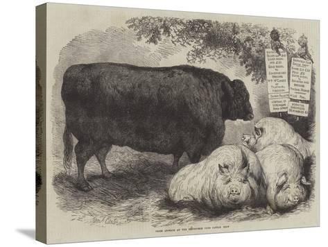 Prize Animals at the Smithfield Club Cattle Show-Samuel John Carter-Stretched Canvas Print