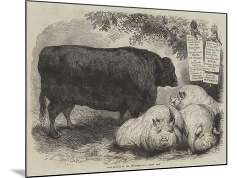 Prize Animals at the Smithfield Club Cattle Show-Samuel John Carter-Mounted Giclee Print