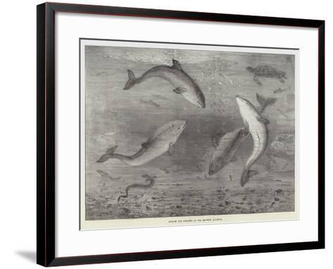 Feeding the Porpoises at the Brighton Aquarium-Samuel Read-Framed Art Print