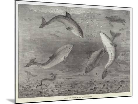 Feeding the Porpoises at the Brighton Aquarium-Samuel Read-Mounted Giclee Print