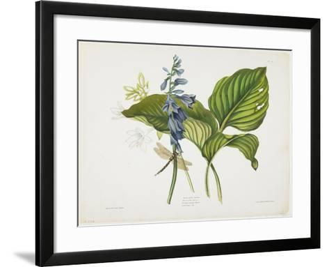 Common Hostas and English Dragon Fly-Robert The Younger Havell-Framed Art Print