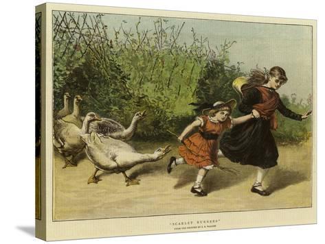 Scarlet Runners-Samuel Edmund Waller-Stretched Canvas Print