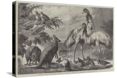 Australian Birds and Animals Presented by the Duke of Edinburgh to the Prince of Wales-Samuel John Carter-Stretched Canvas Print