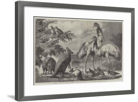 Australian Birds and Animals Presented by the Duke of Edinburgh to the Prince of Wales-Samuel John Carter-Framed Art Print
