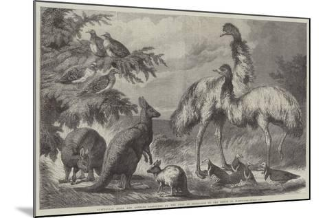 Australian Birds and Animals Presented by the Duke of Edinburgh to the Prince of Wales-Samuel John Carter-Mounted Giclee Print