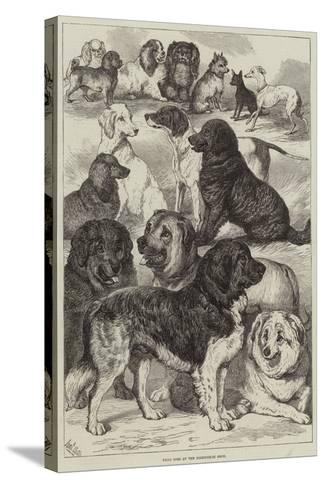 Prize Dogs at the Birmingham Show-Samuel John Carter-Stretched Canvas Print