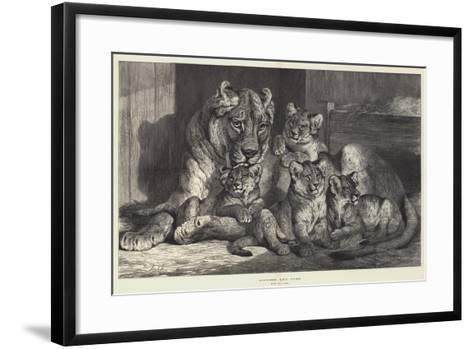 Lioness and Cubs-Samuel John Carter-Framed Art Print