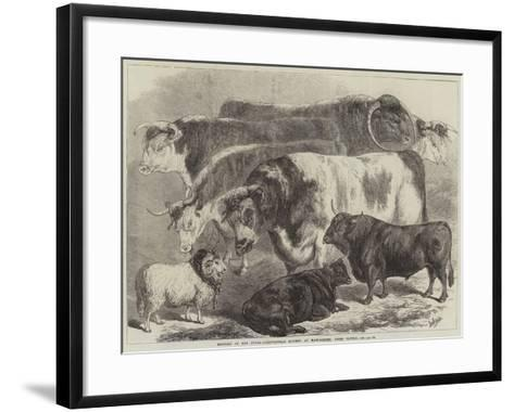 Meeting of the Royal Agricultural Society at Manchester, Prize Cattle-Samuel John Carter-Framed Art Print