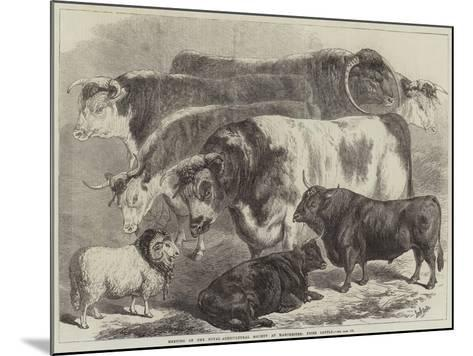 Meeting of the Royal Agricultural Society at Manchester, Prize Cattle-Samuel John Carter-Mounted Giclee Print