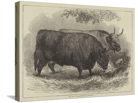 Prize Oxen at the Smithfield Club Cattle Show-Samuel John Carter-Stretched Canvas Print