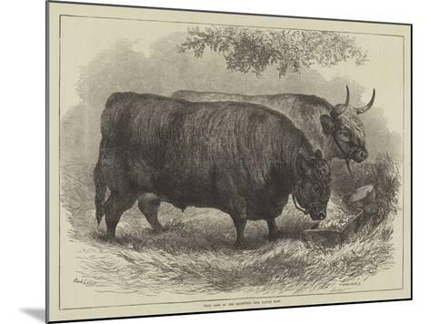 Prize Oxen at the Smithfield Club Cattle Show-Samuel John Carter-Mounted Giclee Print