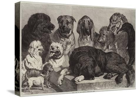 Prize Dogs at the Crystal Palace Dog Show-Samuel John Carter-Stretched Canvas Print