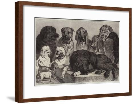 Prize Dogs at the Crystal Palace Dog Show-Samuel John Carter-Framed Art Print