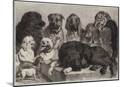Prize Dogs at the Crystal Palace Dog Show-Samuel John Carter-Mounted Giclee Print