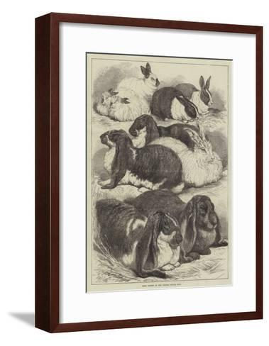 Prize Rabbits at the Crystal Palace Show-Samuel John Carter-Framed Art Print