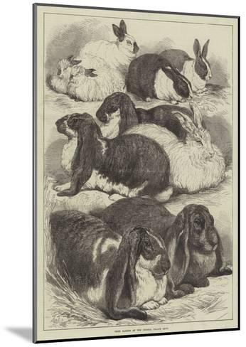 Prize Rabbits at the Crystal Palace Show-Samuel John Carter-Mounted Giclee Print