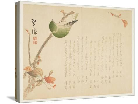 Japanese Nightingale Perched on a Branch- Suit?-Stretched Canvas Print