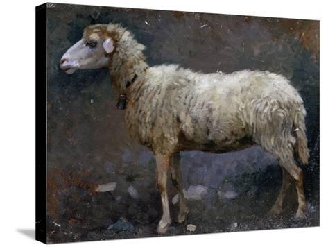 Sheep in Profile-Stefano Bruzzi-Stretched Canvas Print