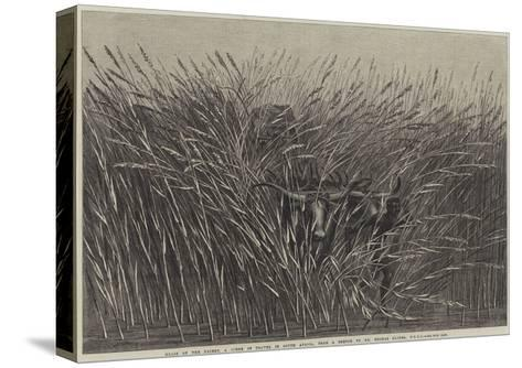 Grass of the Desert, a Scene of Travel in South Africa-Thomas Baines-Stretched Canvas Print