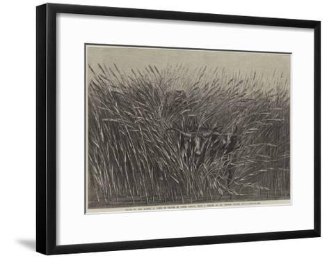 Grass of the Desert, a Scene of Travel in South Africa-Thomas Baines-Framed Art Print